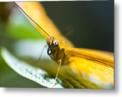Metal Print featuring the photograph Bug Out by Leslie Leda
