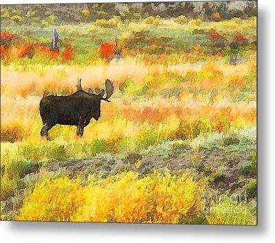 Bull Moose Metal Print by Clare VanderVeen