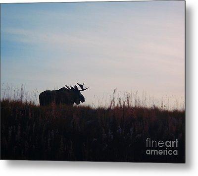 Bull Moose Silhouette Metal Print by Adam Owen