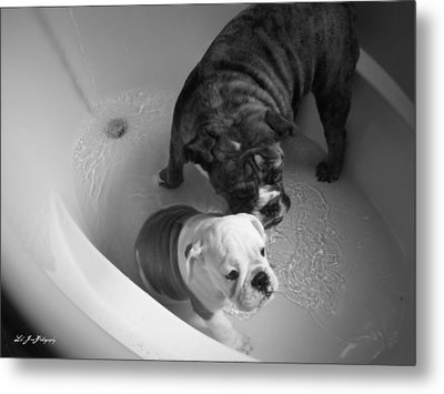 Metal Print featuring the photograph Bulldog Bath Time by Jeanette C Landstrom