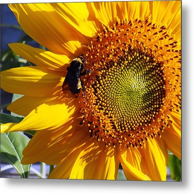 Metal Print featuring the photograph Bumble Bee And Sunshine by Lynnette Johns