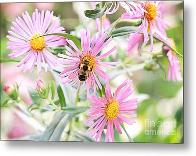 Bumble Bee On Asters Metal Print by Lena Auxier