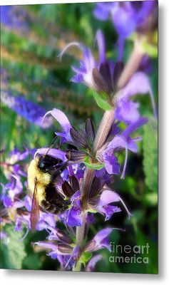 Bumble Bee On Flower Metal Print by Renee Trenholm
