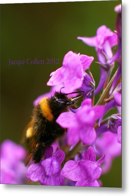 Bumble Metal Print by Jacqui Collett