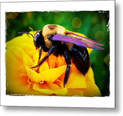 Metal Print featuring the photograph Bumblebee With Bokeh by Judi Bagwell