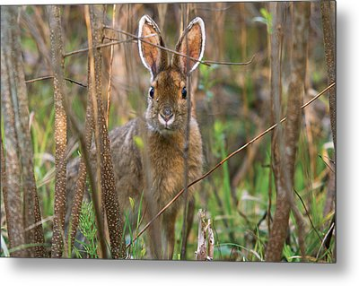 Metal Print featuring the photograph Bunny by Josef Pittner