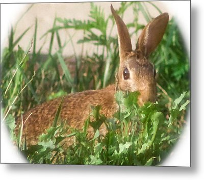 Bunny Playing Hide And Seek Metal Print by Maureen  McDonald