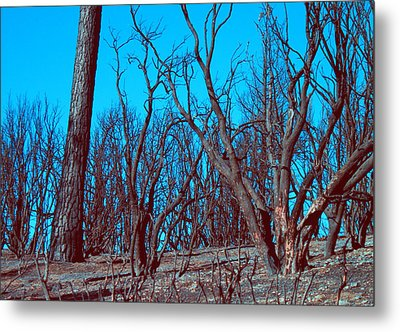 Burned Trees And The Sky Metal Print by Naxart Studio