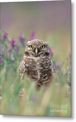 Burrowing Owl Metal Print by Doug Herr