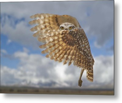 Burrowing Owl Liftoff Metal Print
