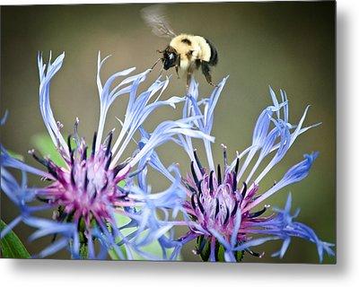 Busy Bee Metal Print by Laura Pineda