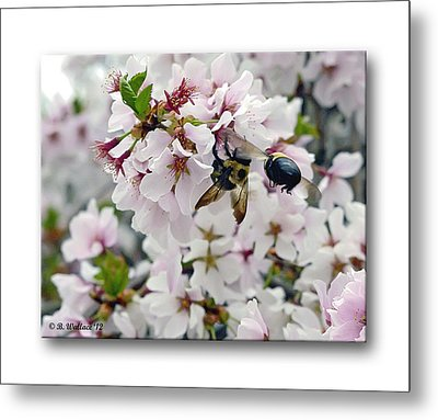 Busy Bees Metal Print by Brian Wallace