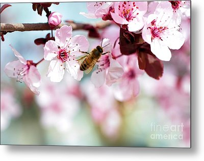 Busy Buzzing Around These Beautiful Blooms... Metal Print