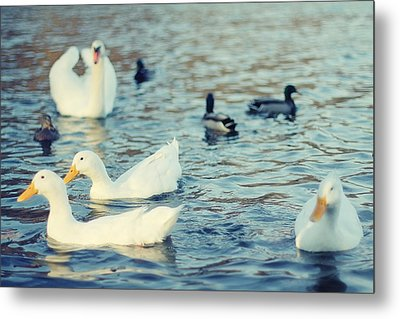Busy Pond Metal Print by Andrey Kopot