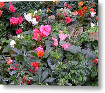 Metal Print featuring the digital art Butchart Begonia Garden by Claude McCoy