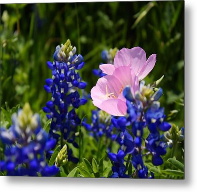 Metal Print featuring the photograph Butter Blue by Lynnette Johns