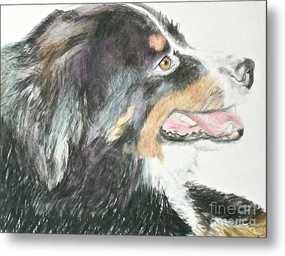 Metal Print featuring the drawing Buttercup The Wonderdog by Beth Saffer