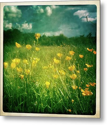 Buttercups Metal Print by Neil Carey Photography