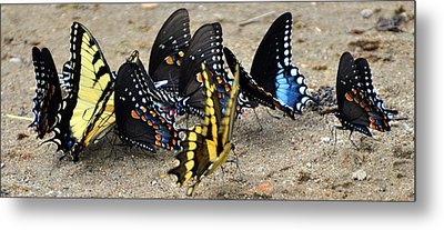 Butterfles And More Butterflies Metal Print by Marty Koch
