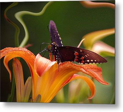 Butterflies Are Free... Metal Print by Arthur Miller