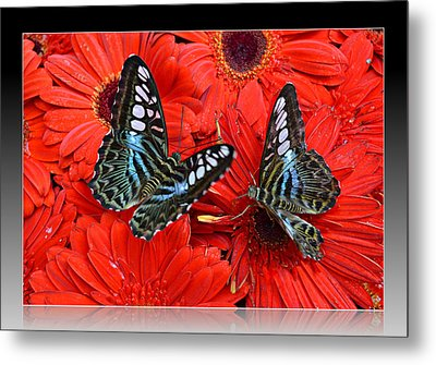 Metal Print featuring the photograph Butterflies On Red Flowers by Rima Biswas