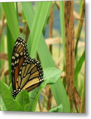 Butterfly-2 Metal Print by Todd Sherlock