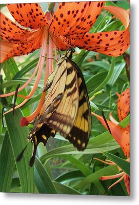 Butterfly-3 Metal Print by Todd Sherlock