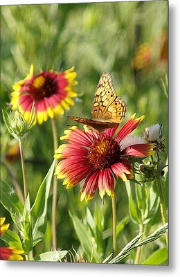 Butterfly And Blankets IIi Metal Print by James Granberry