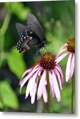 Butterfly And Coine Flower Metal Print by Marty Koch