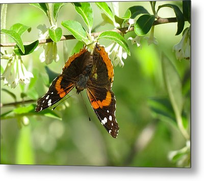 Butterfly Buds Metal Print