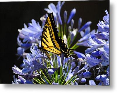 Butterfly Catcher Metal Print by Lynn Bauer