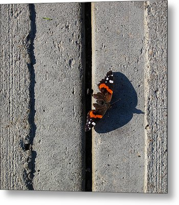 Butterfly Day 2  Metal Print