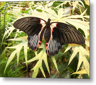Butterfly Design Metal Print