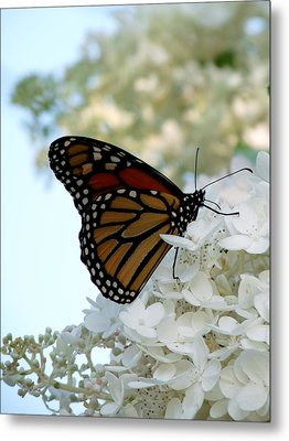 Butterfly Dreams II Metal Print by Terry Eve Tanner