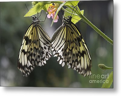 Metal Print featuring the photograph Butterfly Duo by Eunice Gibb