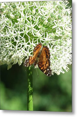 Metal Print featuring the photograph Butterfly Floral  by Rebecca Overton