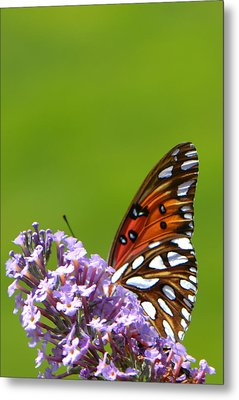 Metal Print featuring the photograph Butterfly From Below by George Bostian