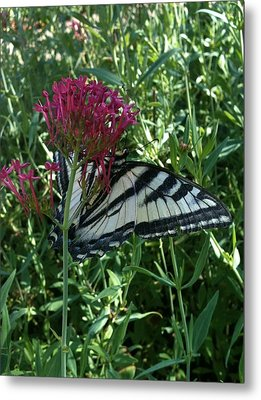 Metal Print featuring the photograph Butterfly Garden by Jeremiah Colley