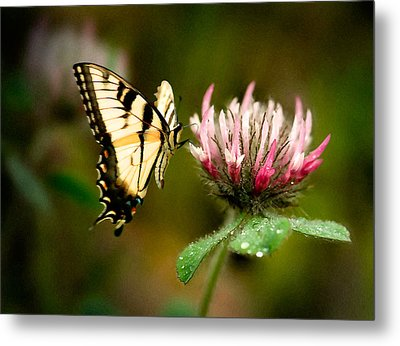 Metal Print featuring the photograph Butterfly by Gary Rose