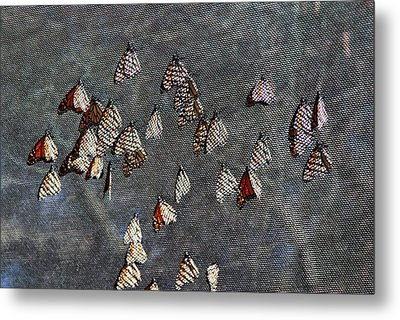 Metal Print featuring the photograph Butterfly Gathering by Tam Ryan