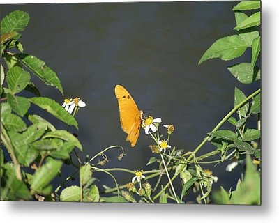 Metal Print featuring the photograph Butterfly by Jerry Cahill