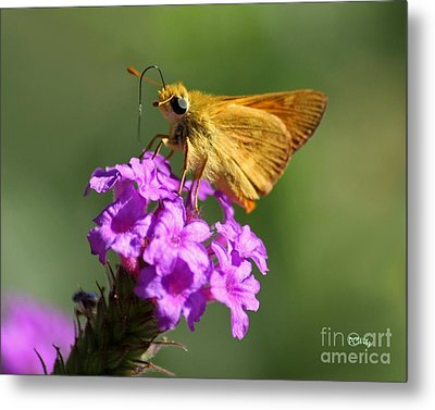 Butterfly Kisses Metal Print by Patrick Witz