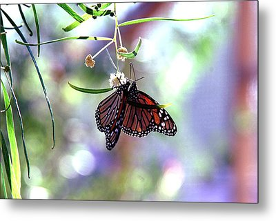 Metal Print featuring the photograph Butterfly Meet-up by Tam Ryan