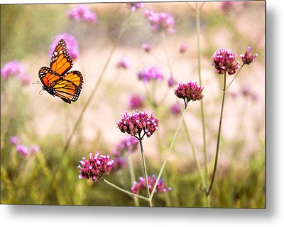 Butterfly - Monarach - The Sweet Life Metal Print by Mike Savad