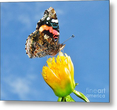 Metal Print featuring the photograph Butterfly N Flower by Jack Moskovita