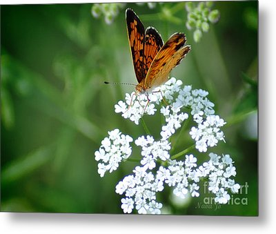 Butterfly On Lacy Wildflower Metal Print by Nava Thompson