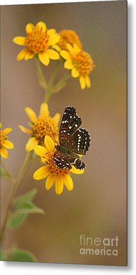 Metal Print featuring the digital art Butterfly On Marigold by John  Kolenberg