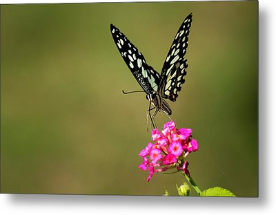 Metal Print featuring the digital art Butterfly On Pink Flower  by Ramabhadran Thirupattur