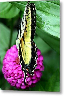 Butterfly On Pink Metal Print by Susan Leggett