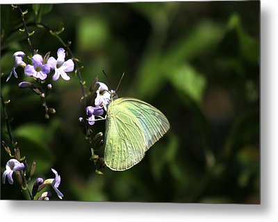 Metal Print featuring the photograph Butterfly On Purple Flower by Ramabhadran Thirupattur